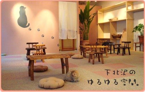 Cateriam Cat Cafe, Tokio